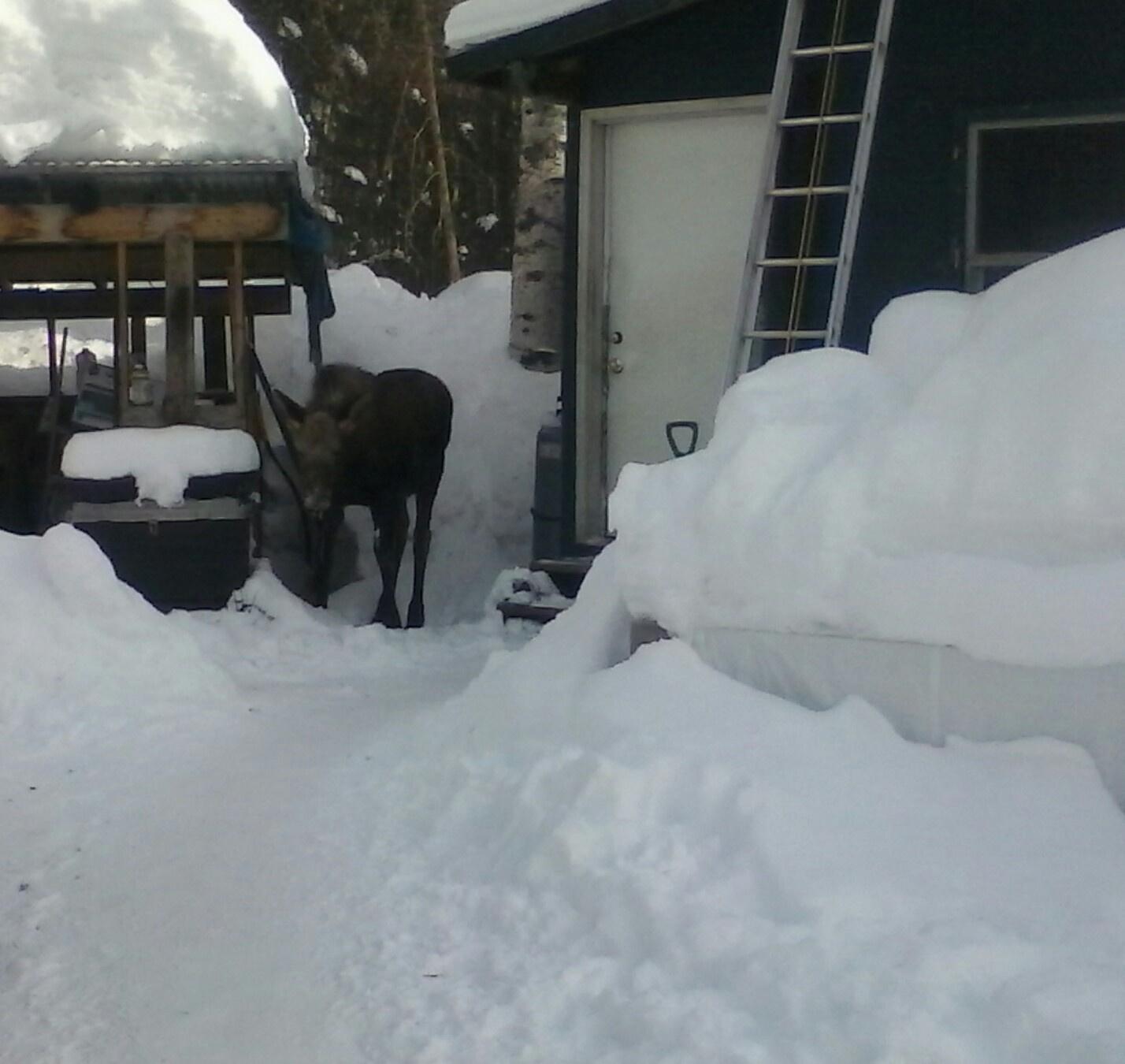 moose-door.jpg
