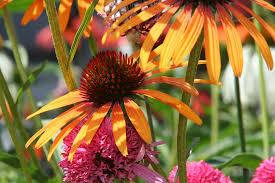 wildflowermix.jpeg