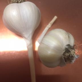 GarlicSmallPicy.jpeg