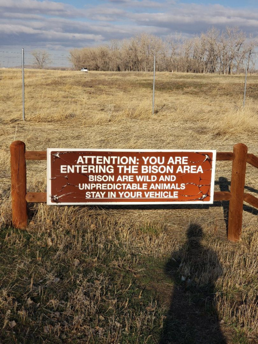Entering Bison Area.jpg
