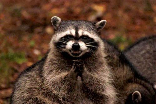 Evil Raccoon.jpg