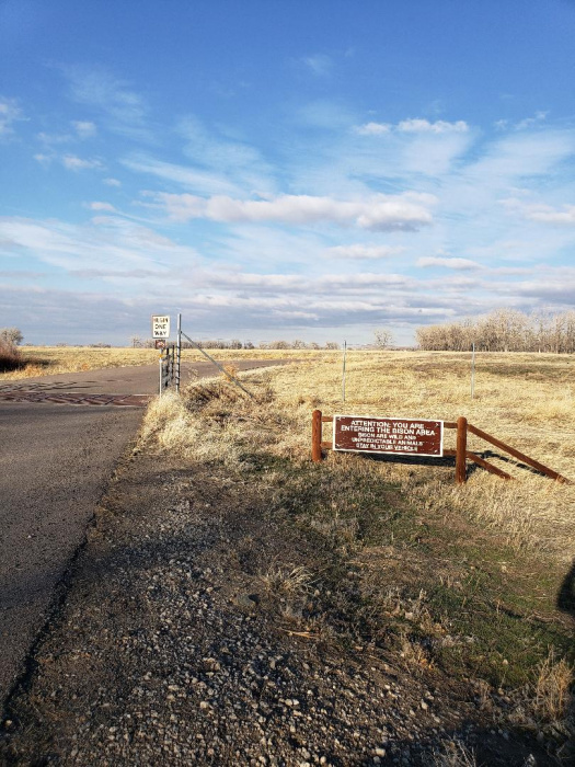 Bison area.jpg
