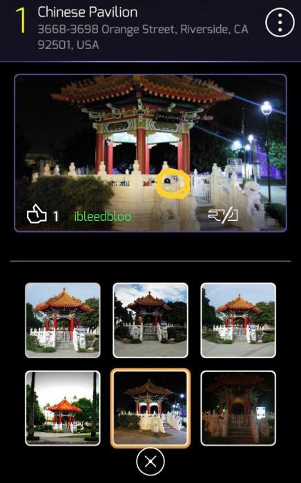 Chinese_Pav_ibleedbloo1.jpg