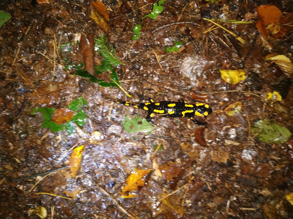 Ein Salamander!