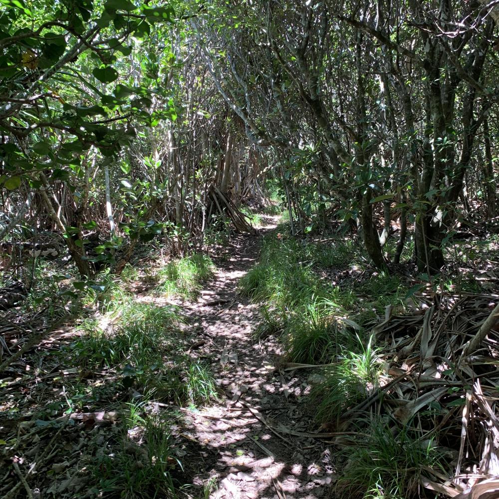 Inside the jungle. Hahajima, Japan
