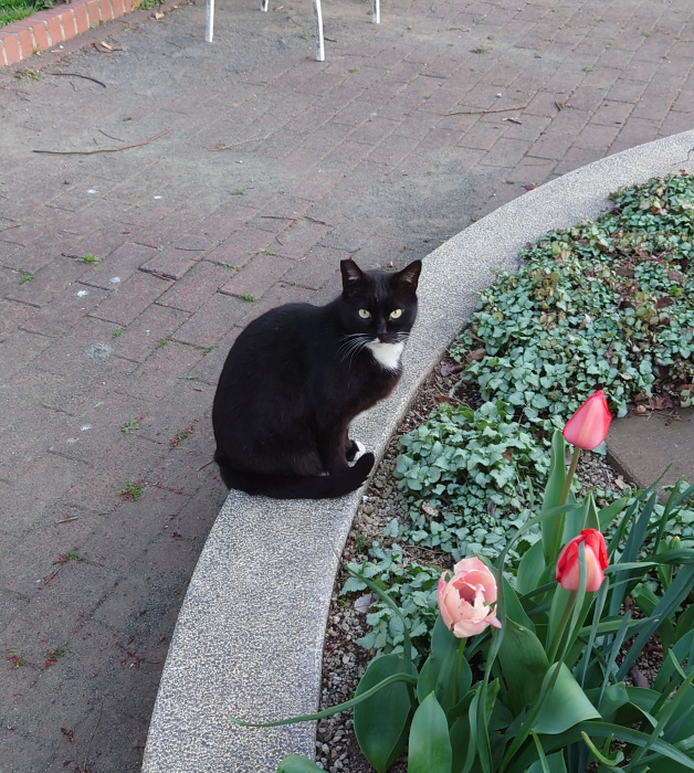 cat_20210324_2.jpg
