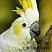 cathybird