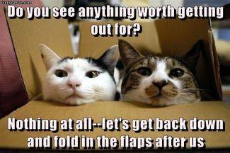 catsbox.jpg