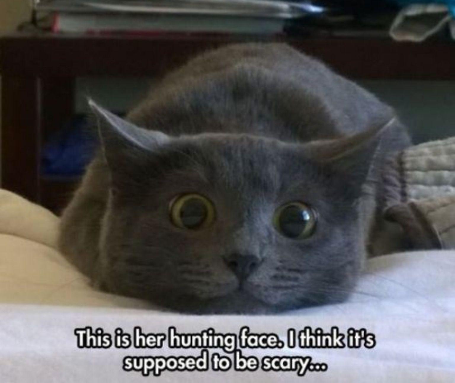 cathunter.jpg