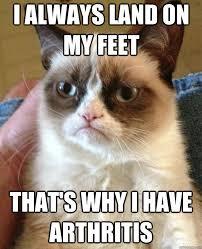arth cat.jpg
