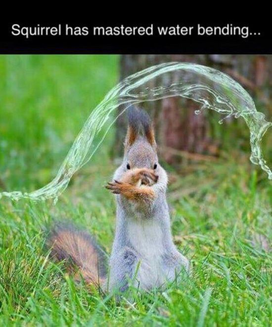 Funniest-Animal-Pictures-20-Super-Funny-Animal-Memes.jpg
