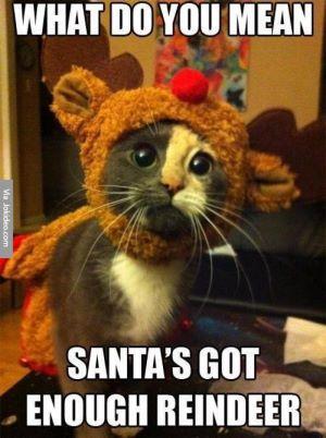 cute-christmas-cat-meme-picture.jpg