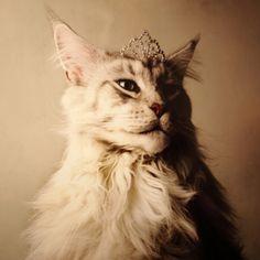 cat in tiara.jpg