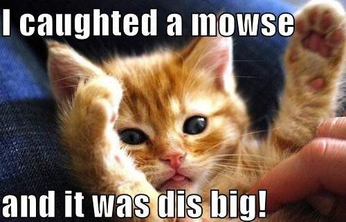 Animals-Memes--cat-mouse.jpg