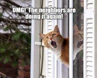 catneigh.jpg