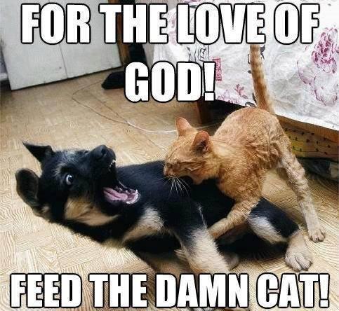 catfood.jpg