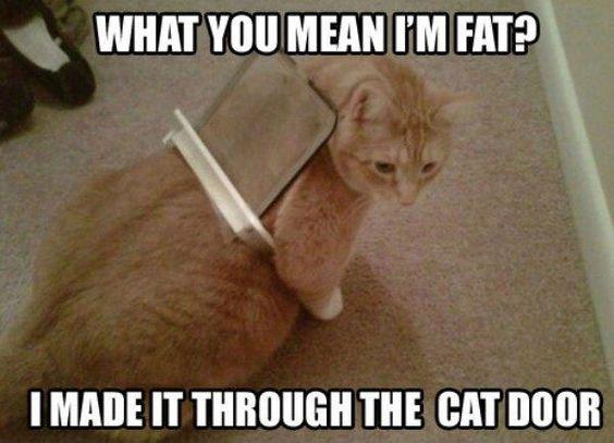 30-Really-Hilarious-Cat-Pics-2-funny-cats-Humor.jpg