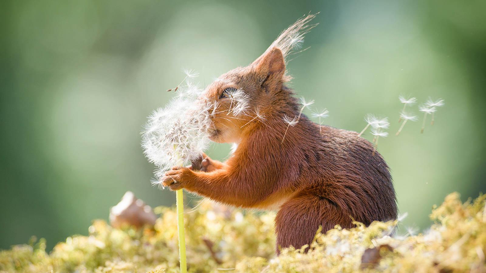 190913154517-comedy-wildlife-photography-awards-12.jpg