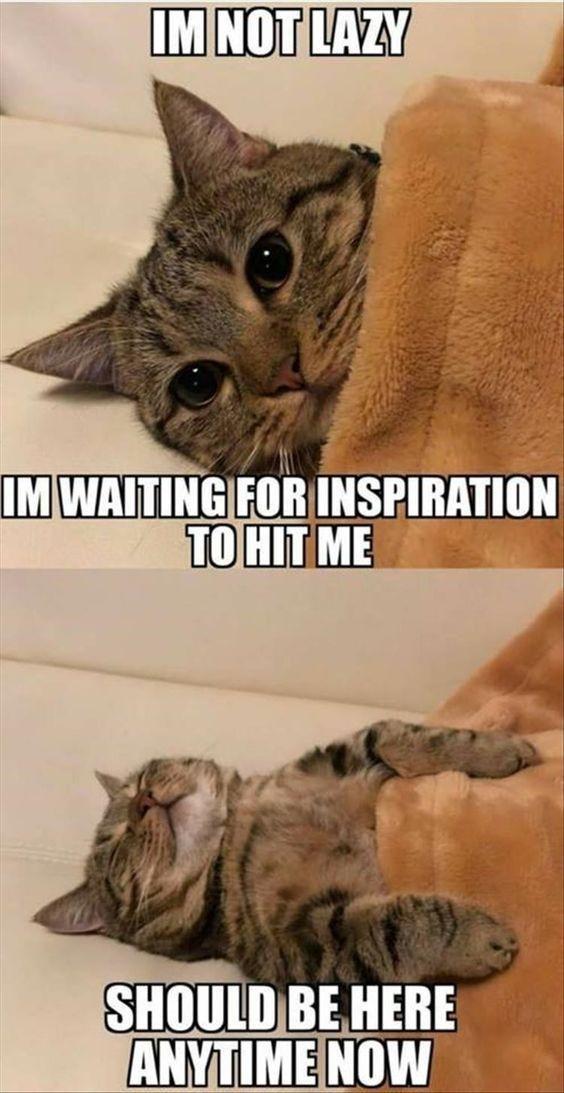 catinsp.jpg