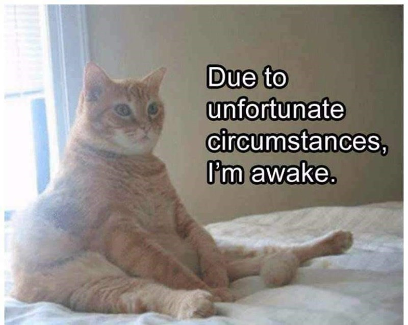 cat-due-to-unfortunate-circumstances-om-awake.jpg