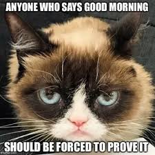 catmorning.jpg