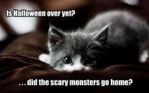 funny-cats-is-halloween-over-yet-300x188.jpg