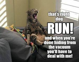 catrundog.jpg