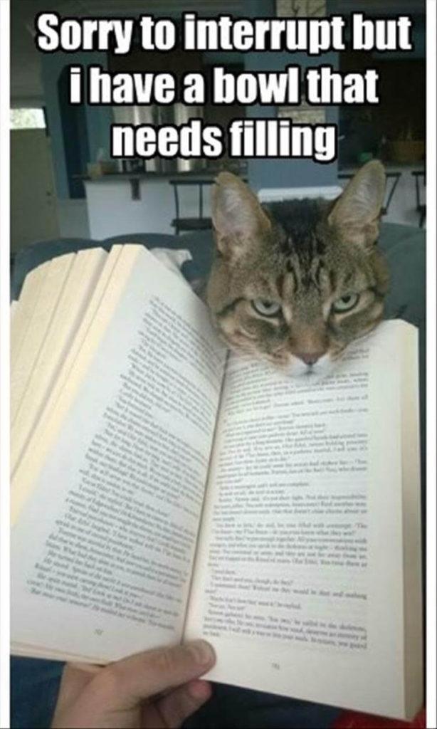 catbook.jpg