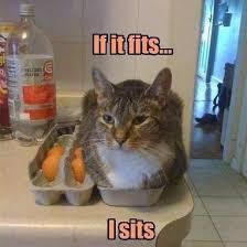 cat eggbox.jpg