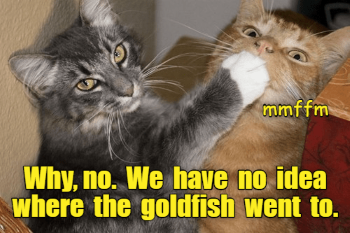 catgold.png