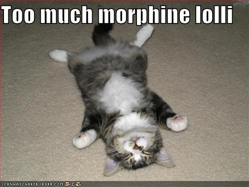 too-much-morphine-lolli.jpg
