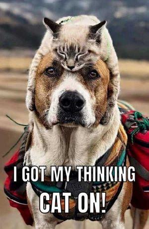 catdoghead.jpg