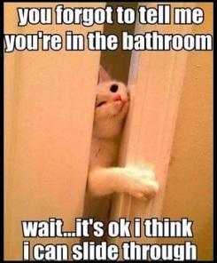 cat-bathroom-visit.jpg