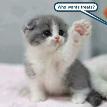 cat treats.jpg