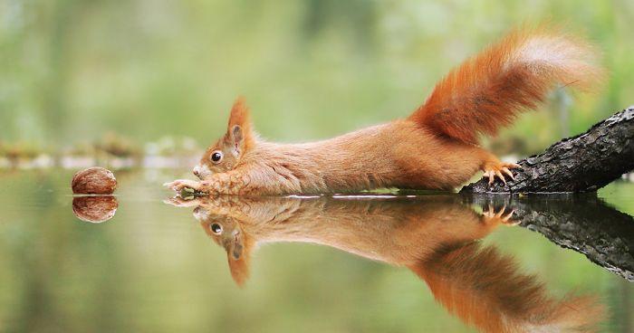 wildlife-photos-austrian-photographer-julian-rad-fb1-png__700.jpg