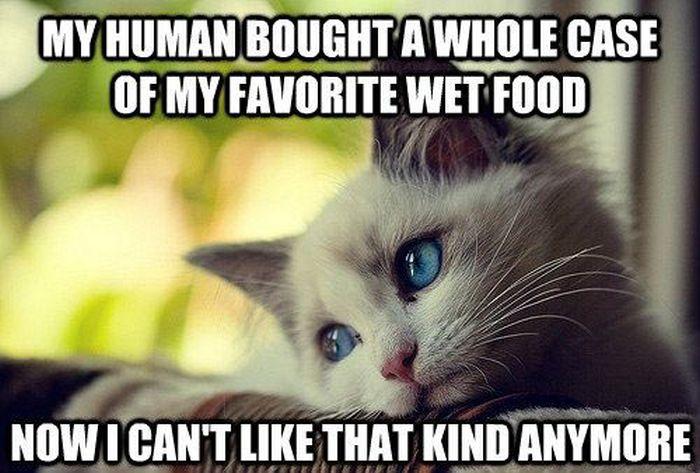 cat-owner-14.jpg