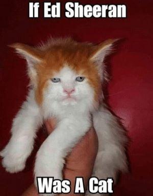cated.jpg