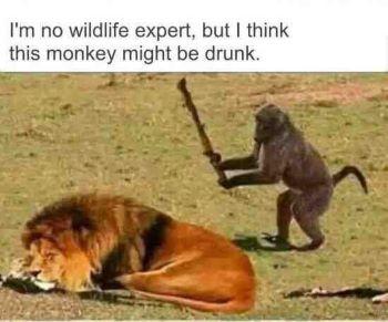 drunkmonkey.jpg