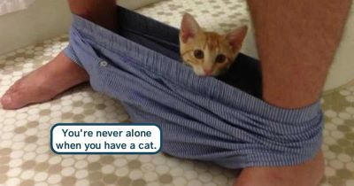 catpants.jpg