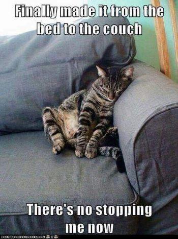 catcouch.jpg