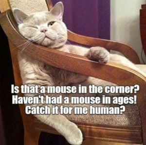 catmouse.jpg