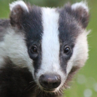 lucybadger