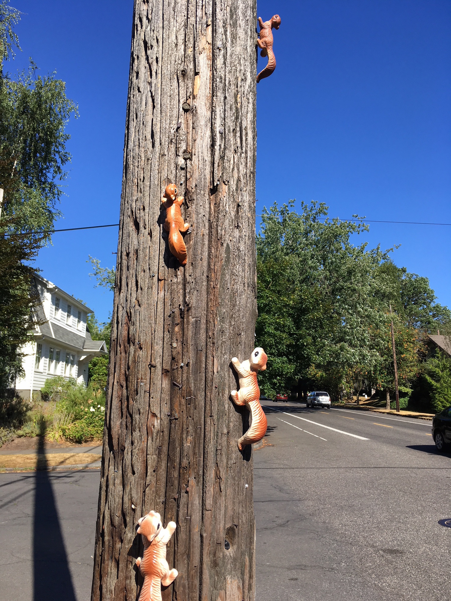pole-art-squirrel.jpg