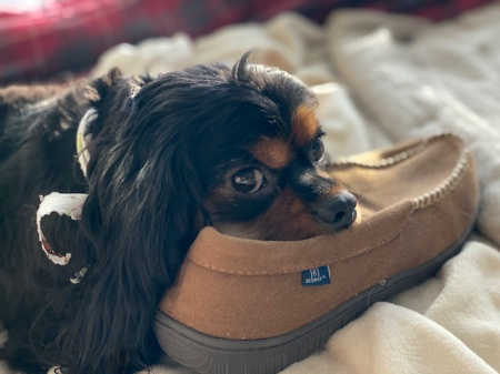 Toby - November 2019.jpg