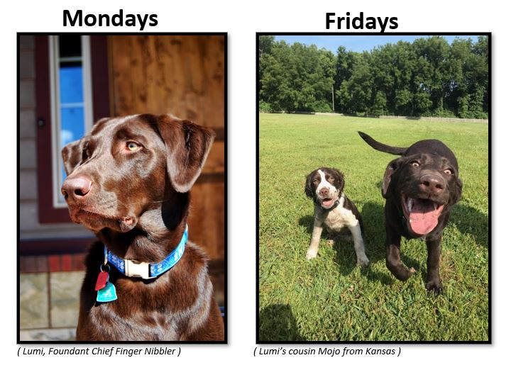 Monday versus Friday Dog.JPG