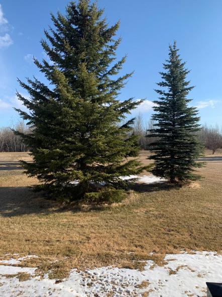 spring in Grande Prairie.jpg