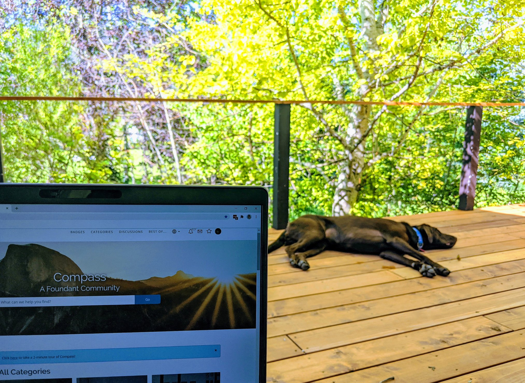 Working from the deck with Lumi.jpg
