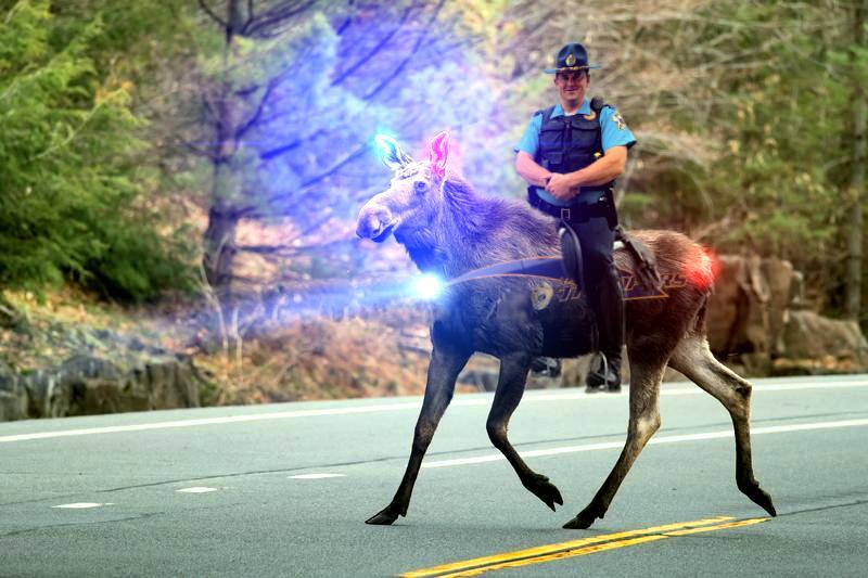 trooper moose.jpg
