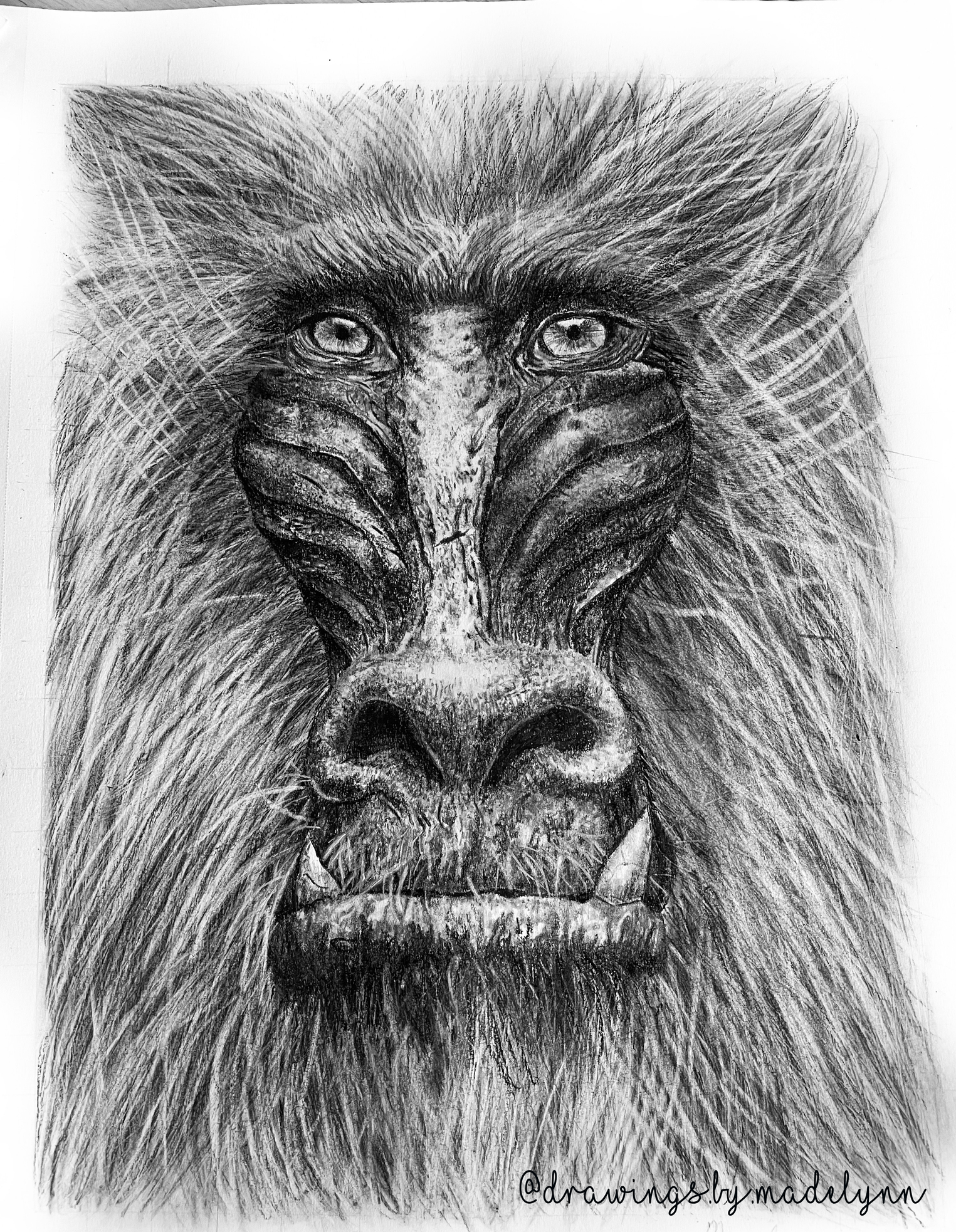 mandrill drawing by Madelynn.png