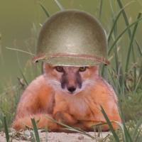 Squad Fox